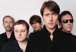 Picture of Suede