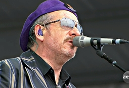 Picture of Elvis Costello